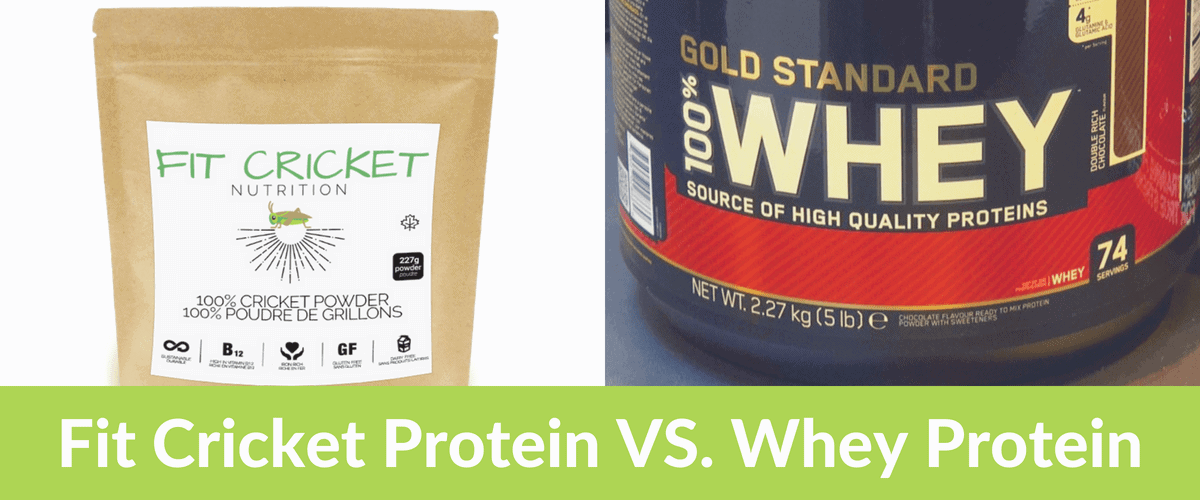 Fit Cricket vs whey protein