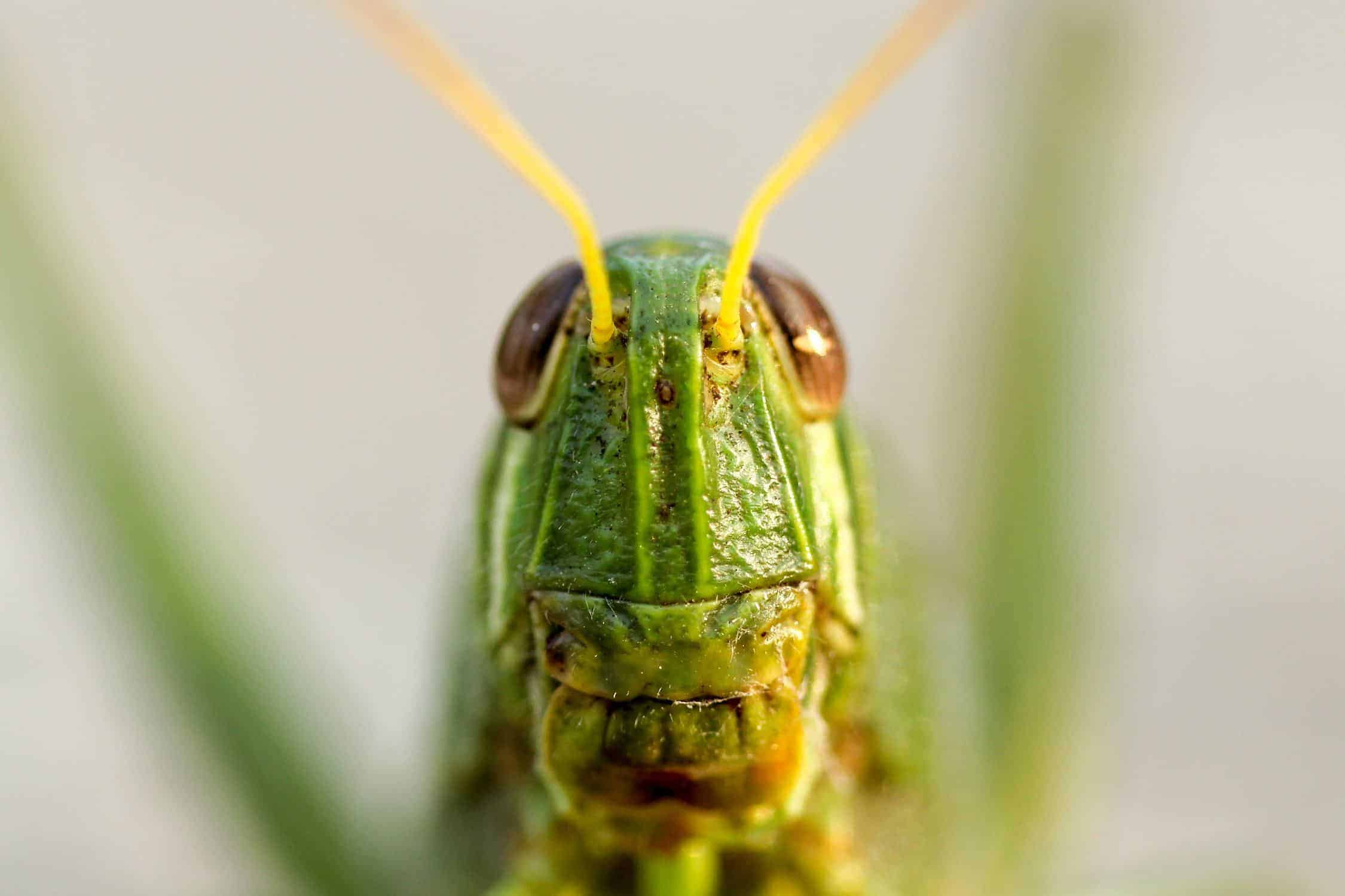 Close up shot of a crickets face